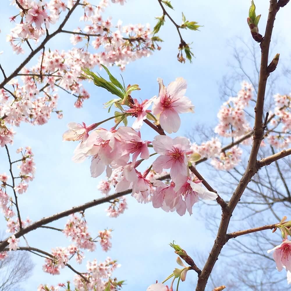 桜文様の着物をリメイクした小物雑貨を集めました